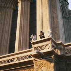 Arno perché sur la cathédrale Notre-Dame