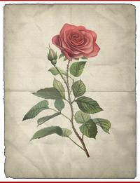 ACS Rose BDA