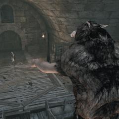 De leider van de roedel beveelt zijn volgelingen om Ezio aan te vallen.