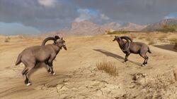 Ibex-origins