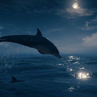 夜间,一只宽吻海豚跳出水面