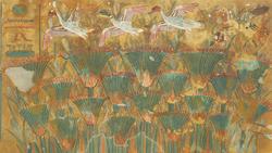 DTAE Papyrus Marsh