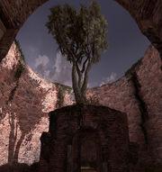 Mausoleo tree v