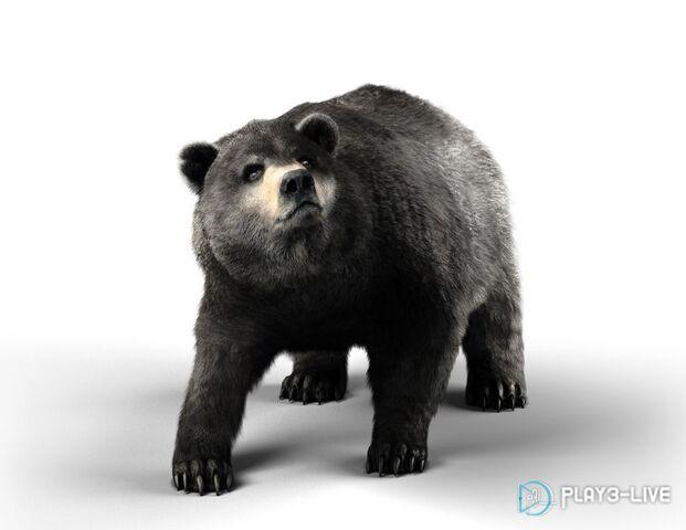 File:AC3-Bear render.jpg