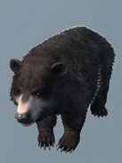 Ours noir -AC3