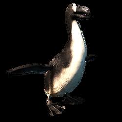 ACRO Grand pingouin