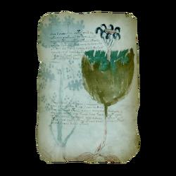 ACIV Manuscrit de Voynich - Folio 35r