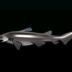 Goblin Shark - 稀有度:非常稀有,尺寸:大