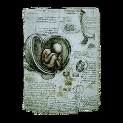 ACIV Le foetus dans l'utérus