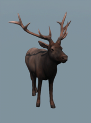 DB Male Elk