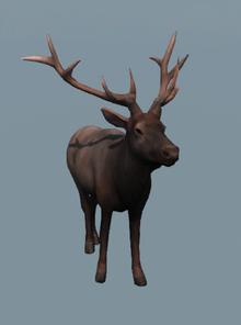 DB Male Elk