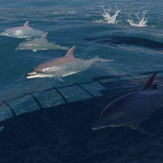 海豚紧跟着<i>阿德瑞斯提亚号</i>