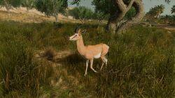 Gazelle-origins