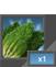 PL lettuce 1