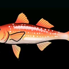 Spotted Goatfish - Rarity: Common, Size: Small