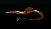 PipefishACP