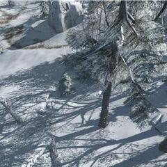 被雪覆盖着的森林