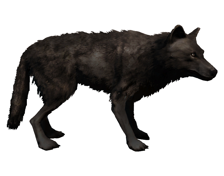 loup noir wiki assassin 39 s creed fandom powered by wikia. Black Bedroom Furniture Sets. Home Design Ideas