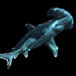 AC4DB - Hammerhead Shark