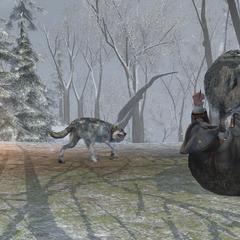 Haytham attaqué par une meute de loups