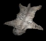 ACOD Eurasian lynx pelt