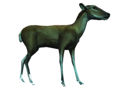 AC4DB - Deer