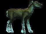Database: Deer (Black Flag)