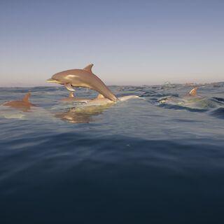 一群海豚跃出水面