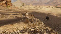 Hyena-origins