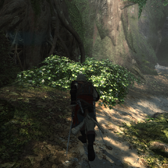 愛德華穿過圖盧姆的叢林