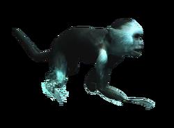 AC4DB - Capuchin Monkey