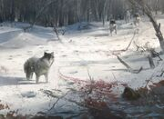 1000px-AC3 Wolves