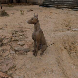在埃及的蹲着的狗