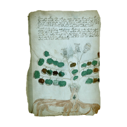 ACIV Manuscrit de Voynich - Folio 34v
