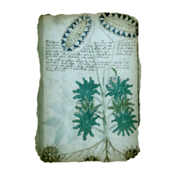 ACIV Manuscrit de Voynich - Folio 33v