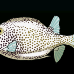 Spotted Trunkfish - 稀有度:稀有,尺寸:小
