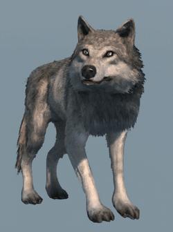 DB Wolf