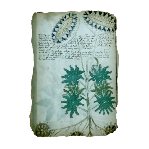 Folio 33v