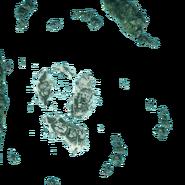 ACIV Mystery Island Carte