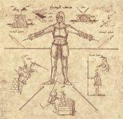 Codex 13