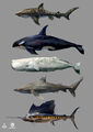 AC4 Marine Animals - Concept Art.jpg
