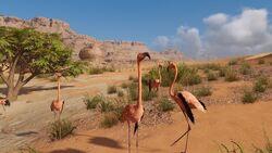 ACO Flamingos