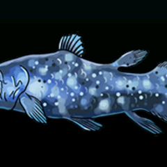Coelacanth - Rarity: Very Rare, Size: Large