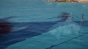 ACOD Shark devouring Testikles