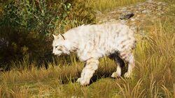 ACOd-EurasianLynxwhite