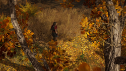 ACOD LotFB Protector of Persia - Kassandra Forest