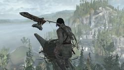 ACIII-FeathersandTrees 2