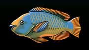 RainbowParrotfishACP