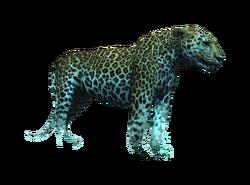 AC4DB - Jaguar