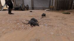 Rats-origins